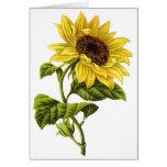 Vintage - Sunflower Illustration Cards