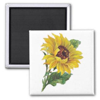 Vintage Sunflower Magnets