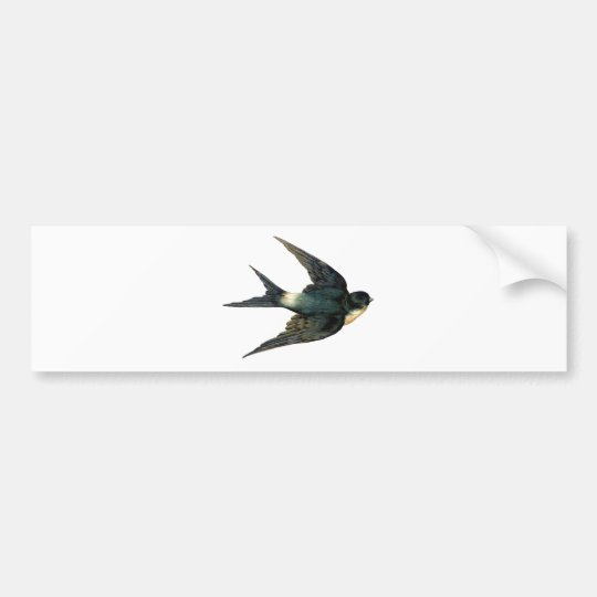 Vintage Swallow Bird Illustration Bumper Sticker
