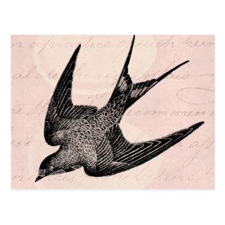 Vintage Swallow Illustration -1800 s Antique Bird Postcards