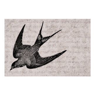 Vintage Swallow Illustration - 1800's Antique Bird Poster