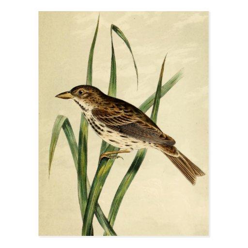 Vintage Swamp Swallow Postcards