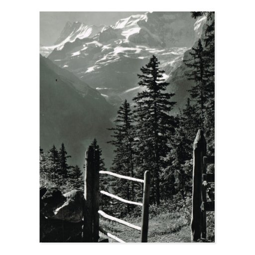Vintage Switzerland Jungfrau, Bernese Oberland Postcard