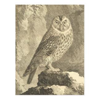 Vintage Tawny Owl Postcard