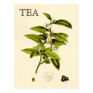 Vintage Tea Plant Postcards