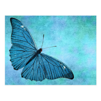 Vintage Teal Blue Butterfly 1800s Illustration Postcard