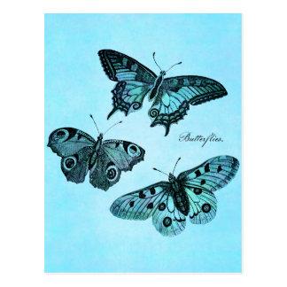 Vintage Teal Blue Butterfly Illustration - 1800 s Postcards