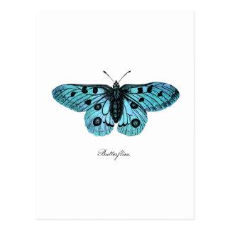 Vintage Teal Blue Butterfly Illustration -1800 s Postcard