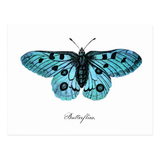 Vintage Teal Blue Butterfly Illustration -1800 s Post Cards