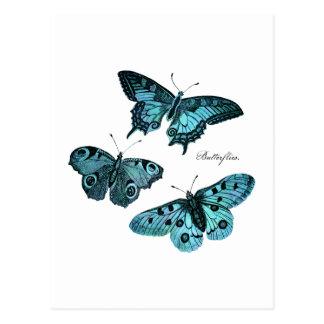 Vintage Teal Blue Butterfly Illustration - 1800's Postcard