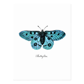 Vintage Teal Blue Butterfly Illustration - 1800's Postcard