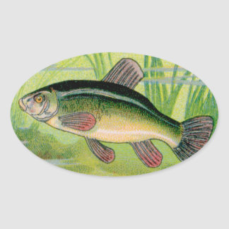 Vintage Tench Fish Print Oval Sticker