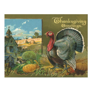 Vintage Thanksgiving, Turkey on the Farm Post Cards