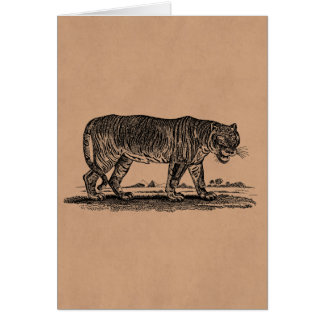 Vintage Tiger Illustration - 1800's Tigers African Card