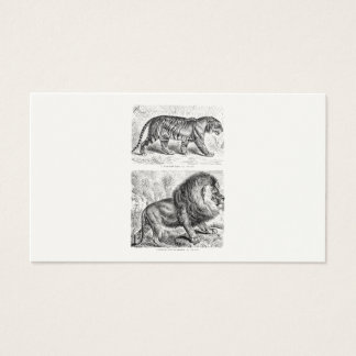 Vintage Tiger Illustration Tigers Template Business Card
