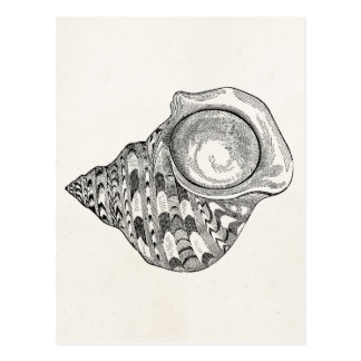 Vintage Top Seashell Antique Shells Template Postcard