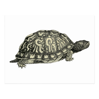 Vintage Tortoise Illustration Postcard