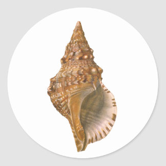 Vintage Triton Seashell Shell, Marine Ocean Animal Classic Round Sticker