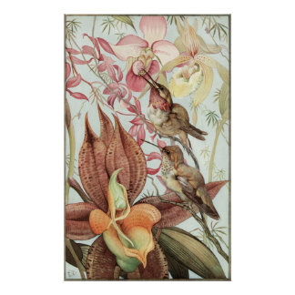 Vintage Tropical Orchids, Flowers and Hummingbirds Poster