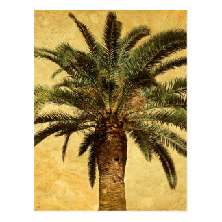 Vintage Tropical Palm Tree Postcard