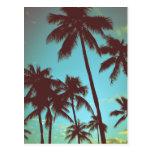 Vintage Tropical Palms Postcard