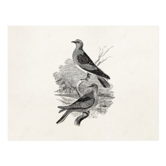 Vintage Turtle Doves Bird Personalized Dove Birds Postcard