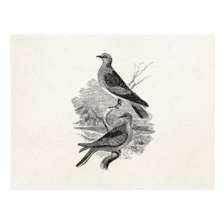 Vintage Turtle Doves Bird Personalized Dove Birds Postcard