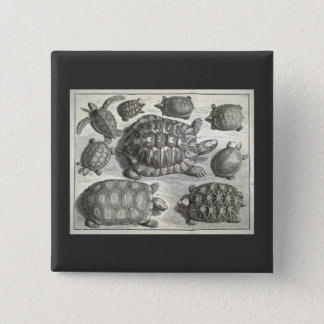 Vintage Turtle Etching 15 Cm Square Badge
