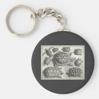 Vintage Turtle Etching Basic Round Button Key Ring