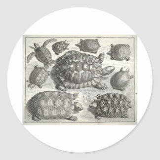 Vintage Turtle Etching Round Sticker