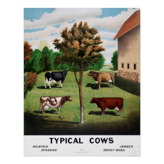 Vintage Typical Cows Holstein Jersey Short-Horn Poster