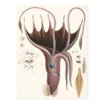 Vintage Umbrella Squid, Marine Life Animals Postcard