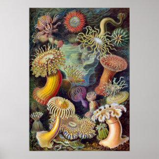 Vintage Underwater Sea Anemones by Ernst Haeckel Poster