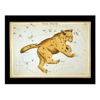 Vintage Ursa Major Bear Postcard