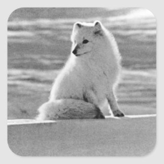 Vintage USA Alaska Arctic fox 1970 Square Sticker
