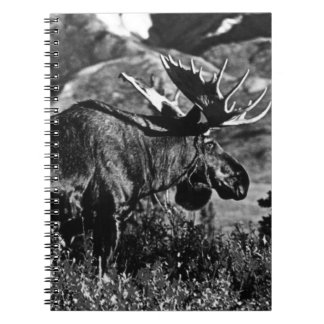 Vintage USA Alaska bull moose 1970 Spiral Notebook