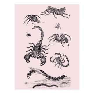 Vintage Vermin Scorpion Spider Flea Pink Postcard