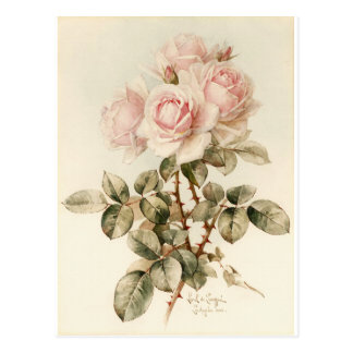 Vintage Victorian Romantic Roses Postcard