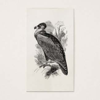 Vintage Vulture Bird Personalized Vultures Birds