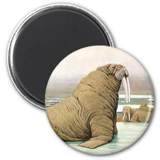 Vintage Walrus on Iceberg in Arctic, Wild Animals Magnet
