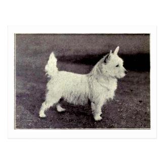 Vintage West Highland White Black & White Postcard