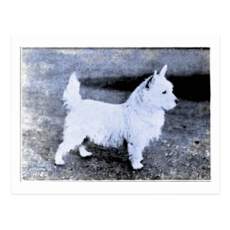 Vintage West Highland White Cyanotype Postcard