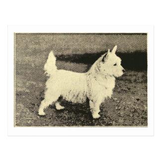 Vintage West Highland White LineArt Postcard