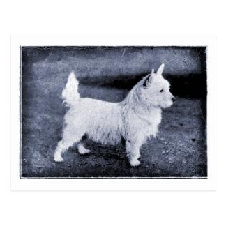 Vintage West Highland White Tintype Postcard