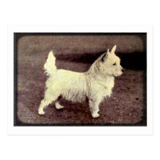 Vintage West Highland White Viewfinder Postcard