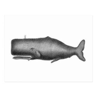 Vintage Whale Postcard