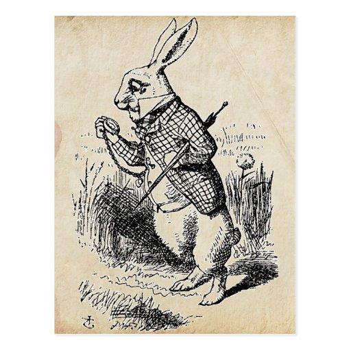 Vintage White Rabbit Post Cards