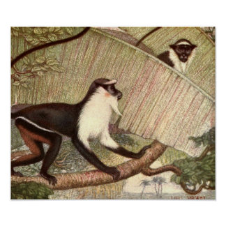Vintage Wild Animal, Diana Monkey by Louis Sargent Poster