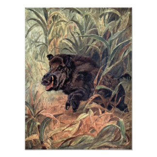 Vintage Wild Animal Indian Boar by Winifred Austen Poster