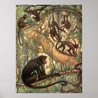 Vintage Wild Animal, Spider Monkeys by Sargent Poster